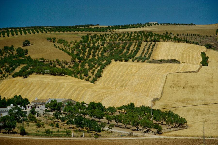 زمین کشاورزی اسپانیا
