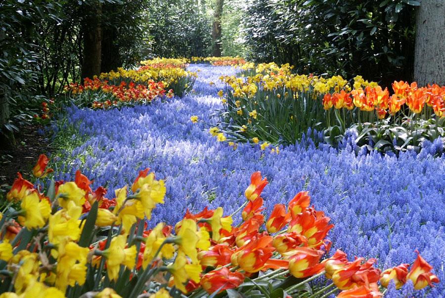 کوکنهوف یا باغ اروپا، بزرگترین باغ گل جهان