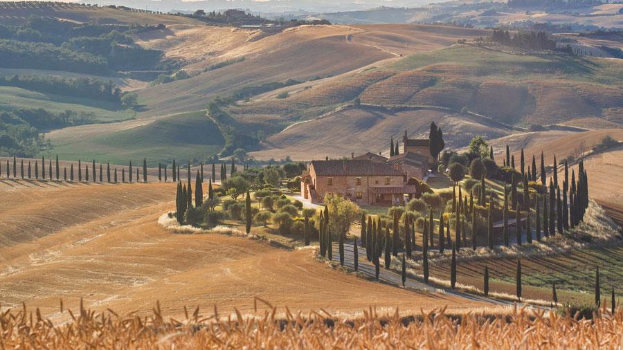 مزرعه گندم ایتالیا